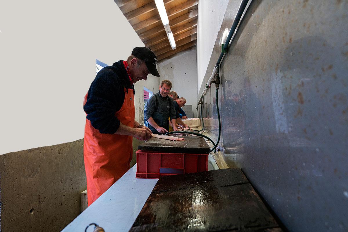 Filitering av fisken